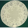 Blossom 20 Inch Round Ecru Doilies Set Of (2) Heritage Lace